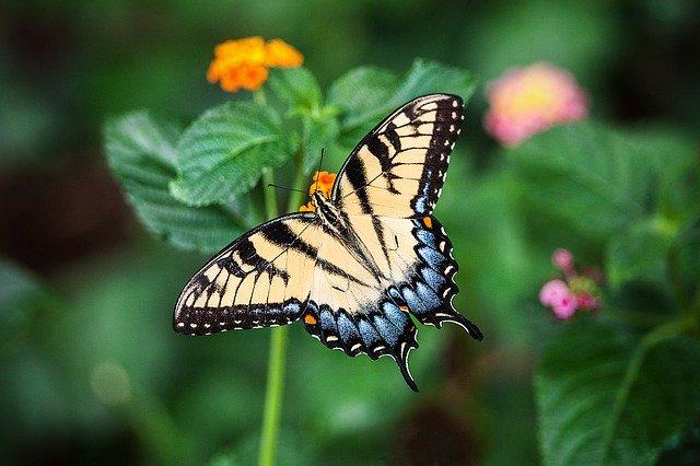 butterfly 1391809 640