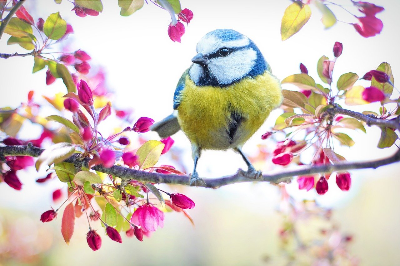 spring bird 2295434 1280